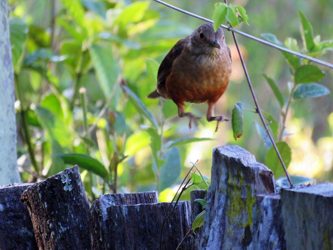 Observação de Aves na Estância Mimosa